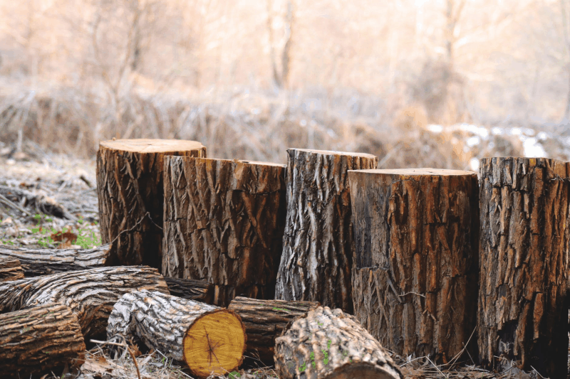 Learn how to cut firewood